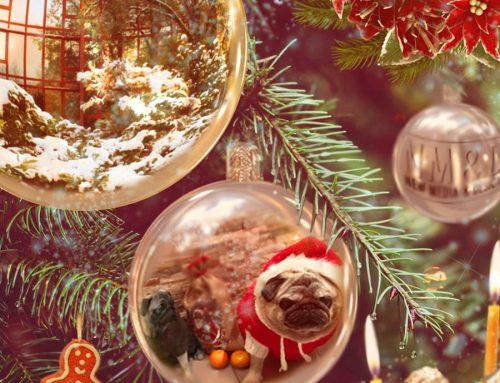Frohe Adventsszeit!