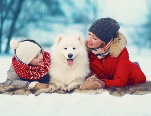 ReDesign Pet Homes Website